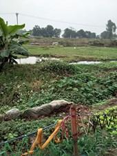 Sai phạm về quản lý đất đai vẫn tiếp diễn