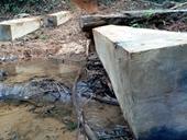 Kon Tum Phát hiện vụ phá rừng tự nhiên ở mức độ nghiêm trọng