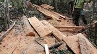 16 đối tượng phá rừng ở vườn Quốc gia Yok Đôn như thế nào
