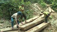 Gần 100m3 gỗ quý bị lâm tặc triệt hạ giữa rừng phòng hộ Tuyên Hóa