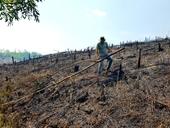 Chặt hạ nhiều hécta rừng, rồi phóng hỏa đốt trụi xóa dấu vết