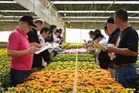 Thủ phủ hoa Đà Lạt chỉ xuất khẩu được 5 sản lượng