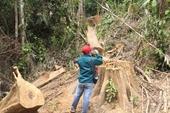 Liên tiếp xảy ra các vụ phá rừng nghiêm trọng