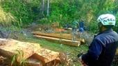"""Phá rừng nghiêm trọng, lâm tặc vận chuyển gỗ nối đuôi nhau như cả đoàn tàu"""""""