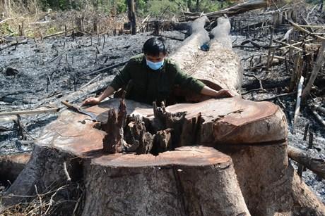 """Vụ chặt phá rừng ở Đăk Nông Khởi tố thêm đối tượng về hành vi """"Nhận hối lộ"""""""