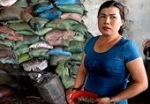 Phê chuẩn khởi tố 5 đối tượng liên quan vụ nhuộm cà phê ở Đăk Nông