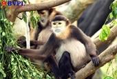 Bị phạt hơn 350 triệu vì cất giữ trái phép 16 cá thể động vật quý hiếm