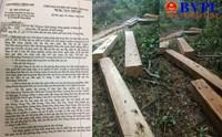 Quảng Trị Rừng phòng hộ vẫn bị tàn phá ghê gớm bất chấp công lệnh của Phó Thủ tướng