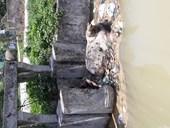 Quảng Xương, Thanh Hóa Lợn chết trên mương dẫn nước sạch đầu nguồn