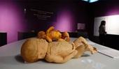 Bộ Văn hóa, Thể thao và Du lịch yêu cầu giải trình triển lãm dùng bộ phận cơ thể người thật
