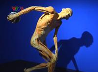 Tạm ngừng triển lãm dùng bộ phận cơ thể người thật