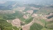 Tỉnh Quảng Ninh chỉ đạo làm rõ hàng chục ha rừng phòng hộ bị chặt phá
