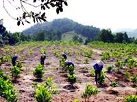 Phó Thủ tướng chỉ đạo xử lý phản ánh, tố cáo vụ việc trồng rừng ở Lâm Đồng