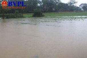 Hà Tĩnh Hơn 7 000 hecta lúa và rau màu đối diện nguy cơ hư hại do mưa lớn gây ngập úng