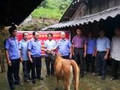 VKSND huyện Kỳ Sơn, tỉnh Nghệ An Tặng bò giống cho hộ nghèo