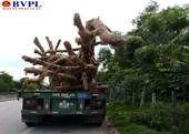 Thêm một cây khủng từ Phú Yên đi ra Bắc bị CSGT bắt giữ tại Quảng Trị