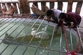 Đại gia Việt săn thủy quái lớn nhất thế giới về thả ao chơi vui