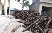 Cần xử lý nghiêm hành vi khai thác rừng trái phép