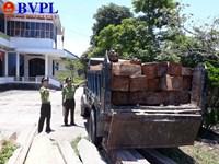Vụ tàn phá rừng phòng hộ Quảng Trị Đã khởi tố vụ án theo yêu cầu của Viện kiểm sát