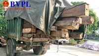 Chở đầy gỗ không nguồn gốc, một xe tải bị tạm giữ