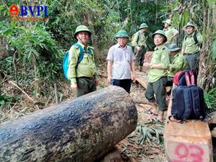Để lâm tặc hoành hành, hàng loạt tổ chức, cá nhân huyện Nam Giang bị kỷ luật