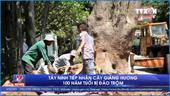 Tây Ninh tiếp nhận cây giáng hương 100 năm tuổi bị đào trộm