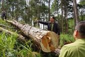 Phó Thủ tướng yêu cầu kiểm tra, làm rõ các vụ phá rừng trên địa bàn tỉnh Lâm Đồng