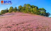 """Tổ chức """"Mùa hội cỏ hồng Lang Biang"""" lần thứ 2"""