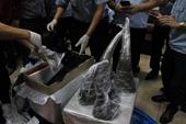 Thêm 1 vụ vận chuyển sừng tê giác được Hải quan phát hiện tại cửa khẩu sân bay quốc tế Nội Bài
