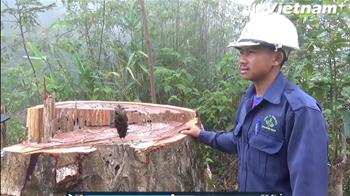 Đột kích sào huyệt phá rừng được coi là 'an toàn nhất Tây Nguyên'