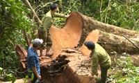 Yêu cầu kiểm điểm trách nhiệm tổ chức, cá nhân để xảy ra tình trạng phá rừng chiếm đất