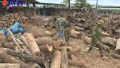 Phát hiện số lượng lớn gỗ không rõ nguồn gốc tại một lò than