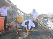 Phê chuẩn khởi tố đối tượng nuôi nhốt 16 cá thể rùa biển