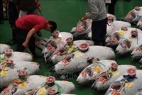 Cả thế giới choáng váng về con cá ngừ khổng lồ giá 3,1 triệu USD