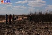 Dân nghèo khóc ngất gần Tết bị bà Hỏa thiêu rụi hơn 100ha mía