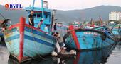 Phát hiện nhóm ngư dân lạ mặt khai thác tận diệt hải sản ở Đà Nẵng