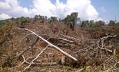 Khai trừ Đảng đại tá công an tiếp tay cho phá rừng