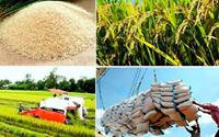 """Hạt gạo làng ta""… gửi ra thế giới"