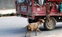 Rơi nước mắt câu chuyện xúc động về loài chó cuối năm Mậu Tuất