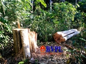 Vụ phá rừng nghiêm trọng đầu năm mới Khởi tố, bắt tạm giam một đối tượng