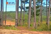 """Lâm Đồng """"lắc đầu"""" đối với nhiều dự án đầu tư xâm phạm quy hoạch rừng"""