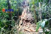 Phá rừng nghiêm trọng ngay đầu năm mới