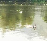 Phát hiện thi thể người đàn ông nổi trên sông Đáy