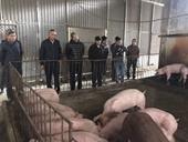Dịch tả lợn châu Phi ở Thái Bình Kiểm tra các chợ bán lẻ và cơ sở sản xuất lạp xưởng