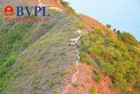 Ngây ngất với cảnh sắc Xuân với loài hoa rừng lạ trên núi Cô Tiên