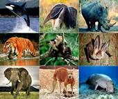 Xử lý tội vi phạm quy định về bảo vệ động vật quý, hiếm