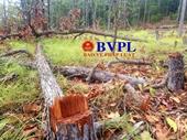 Phát hiện vụ chặt phá rừng quy mô lớn tại rừng phòng hộ Ia Meur