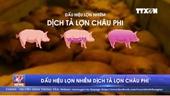 Dấu hiệu lợn nhiễm dịch tả lợn châu Phi