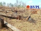 Bắt giữ một đối tượng trong vụ phá rừng quy mô lớn ở Gia Lai