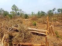 Khởi tố vụ phá rừng phòng hộ Ia Grai